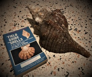 field guide and horse conch