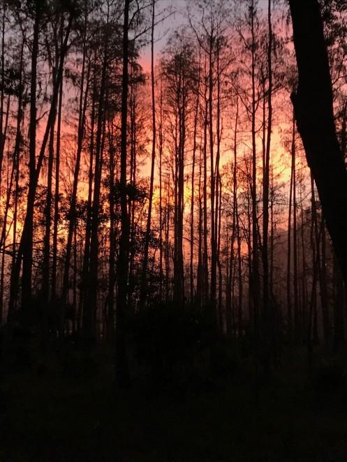 starkey woods on fire sunrise
