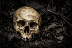 Darkness theme of loneliness and death is Truth of Life. human skull in cemetery on the pile carcass plant and dry leaves on dark background which has dim light and copy space.